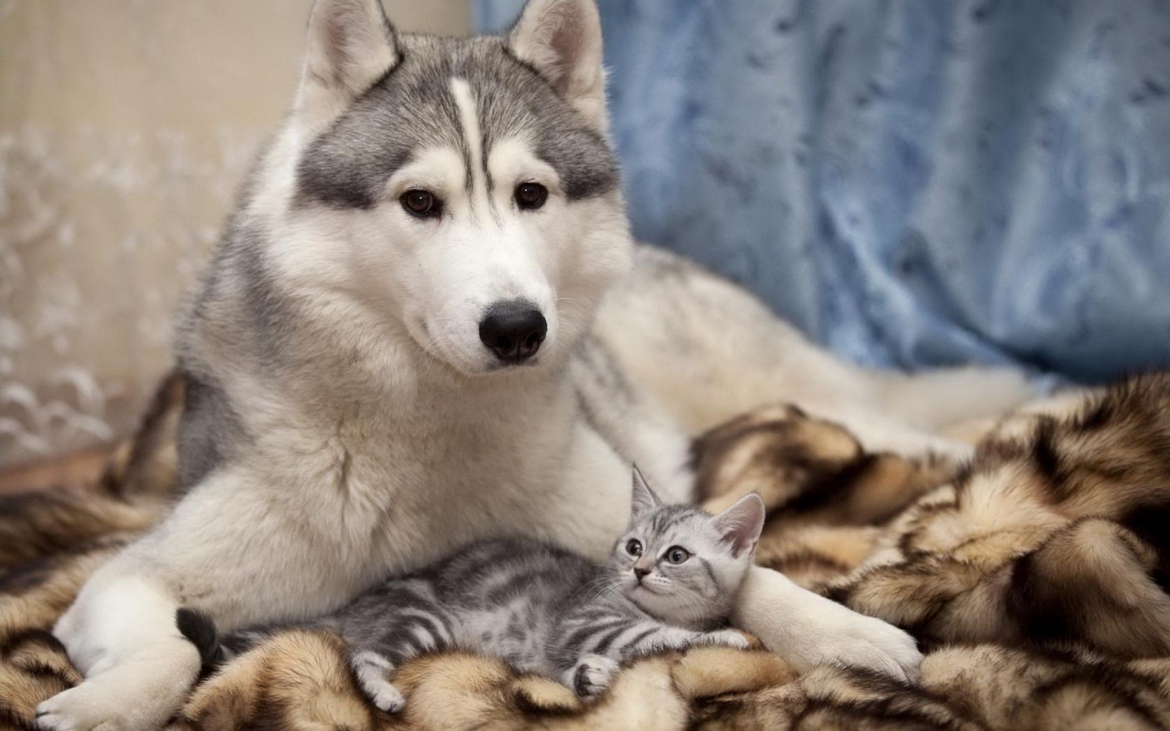 Собака и котенок обои для рабочего стола, картинки, фото ...