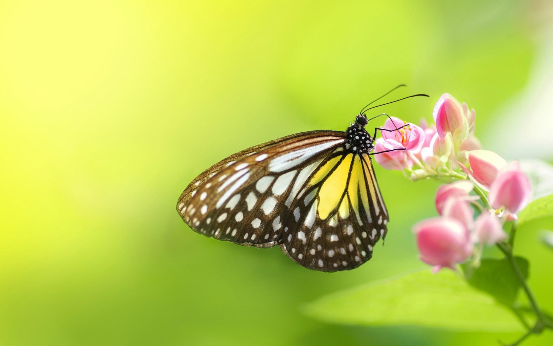 сайт бабочка игры