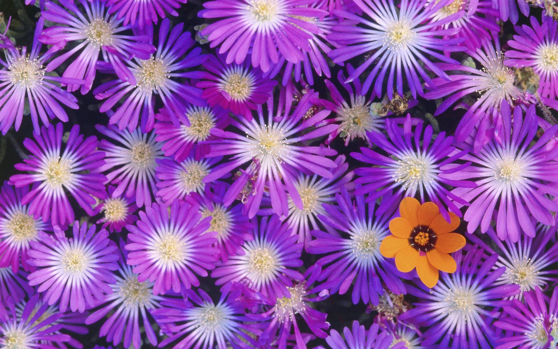 ... обои цветы букет красивых цветов 1920x1200: hq-wallpapers.ru/wallpapers/flowers/pic22614_raz1920x1200