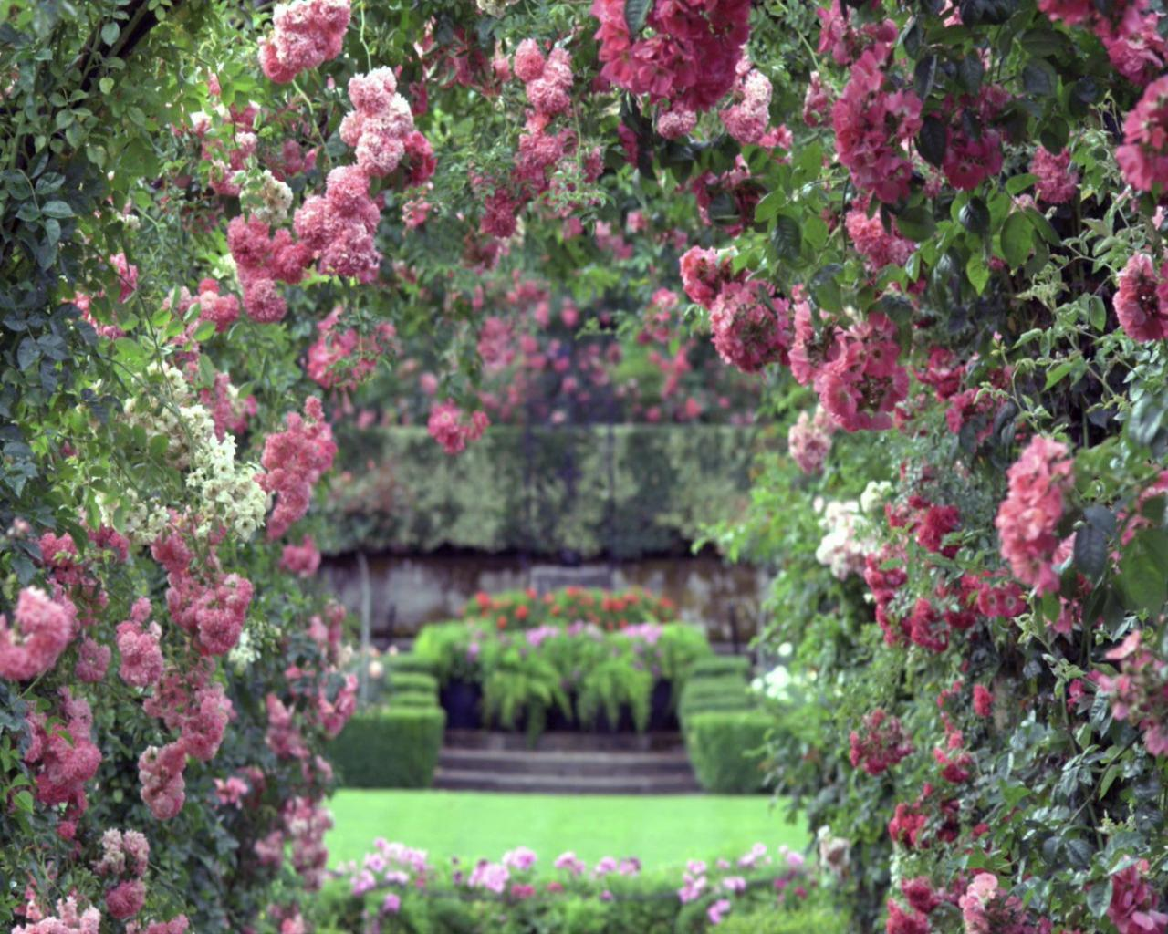 Цветочный сад обои для рабочего стола