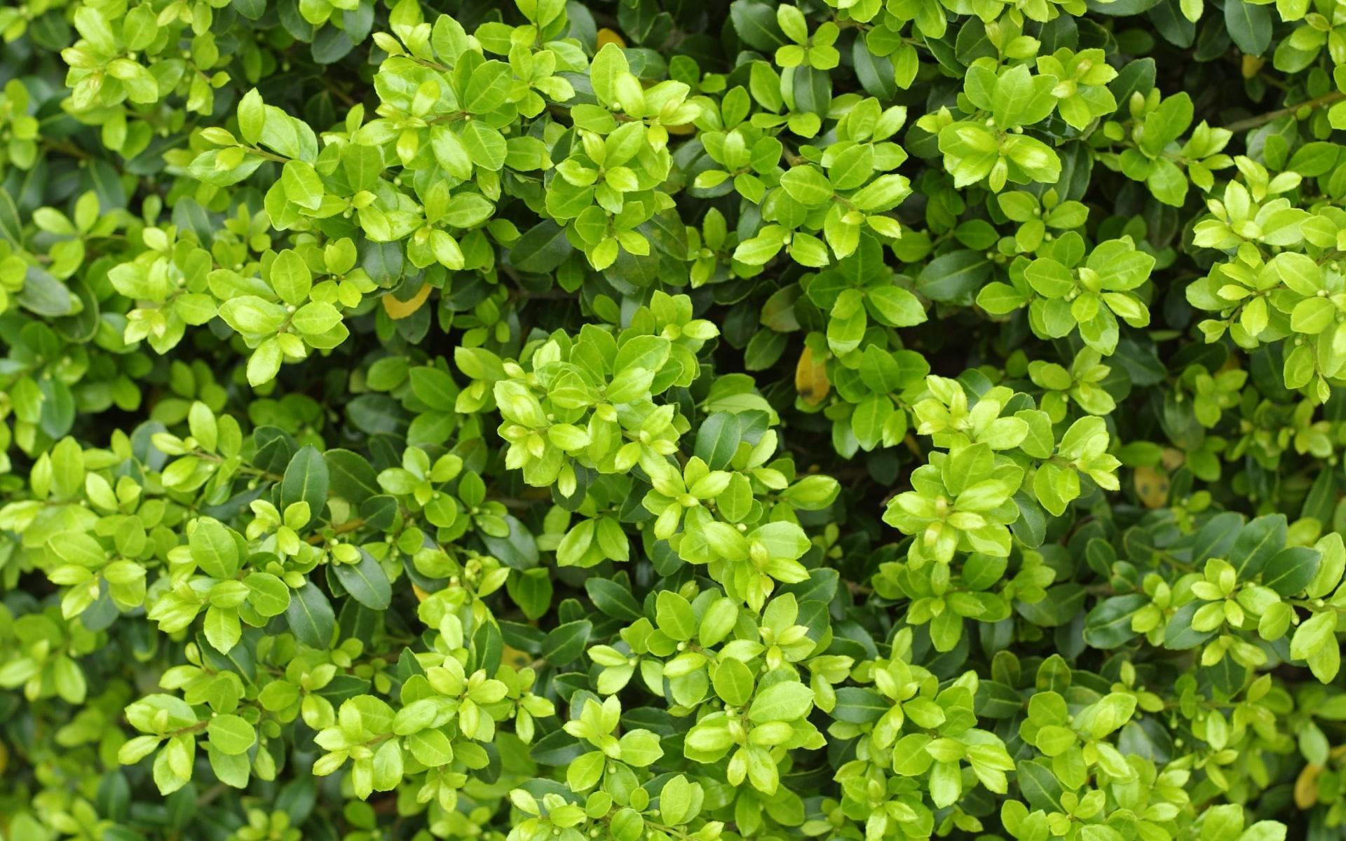 Густая листва обои для рабочего стола