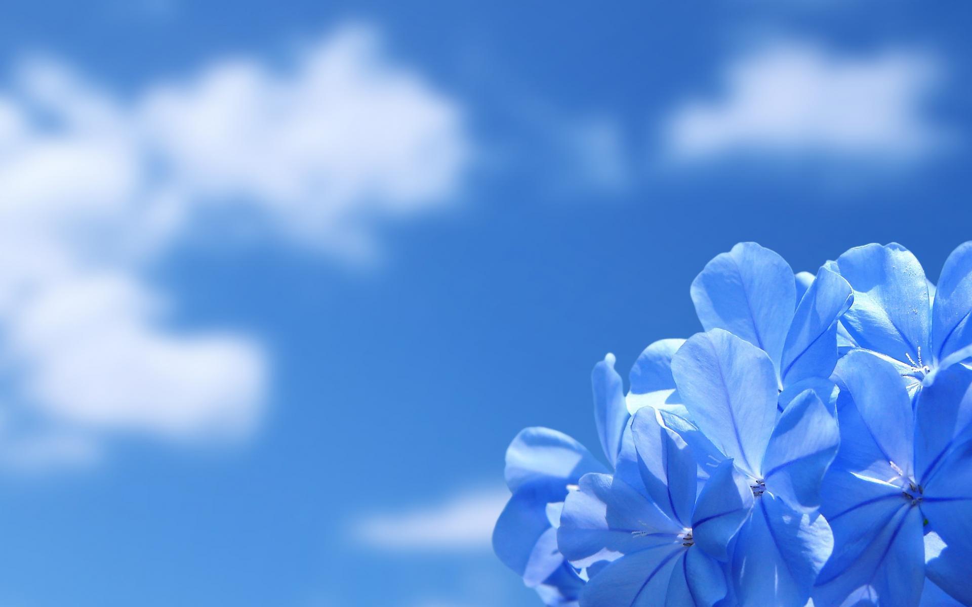 Нежные цветы обои для рабочего стола