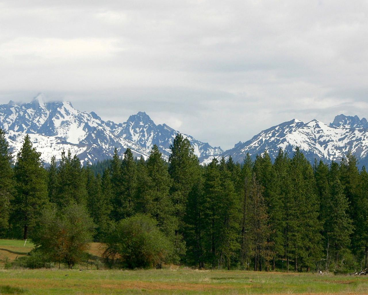 Вершины и хвойный лес скачать 1280x1024