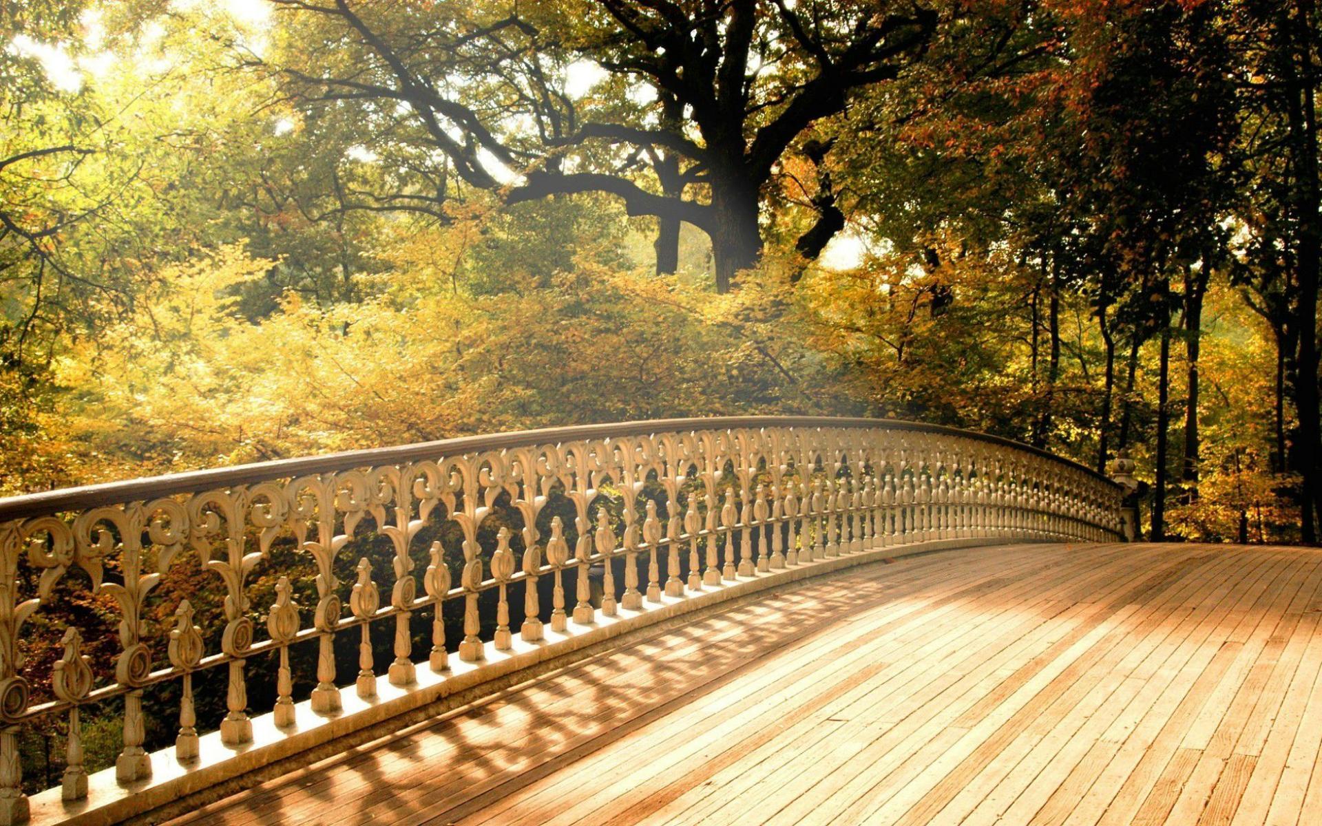 Картинки на рабочий стол с осенним лесом