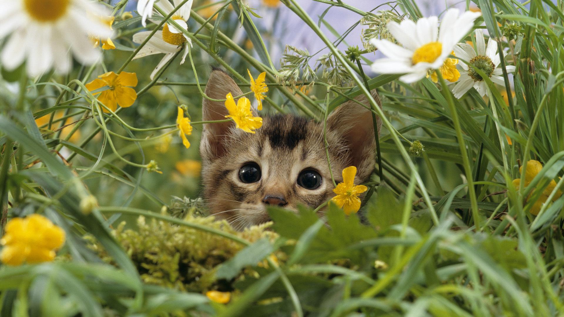 Макро ромашки поляна луг кошка 1920x1080