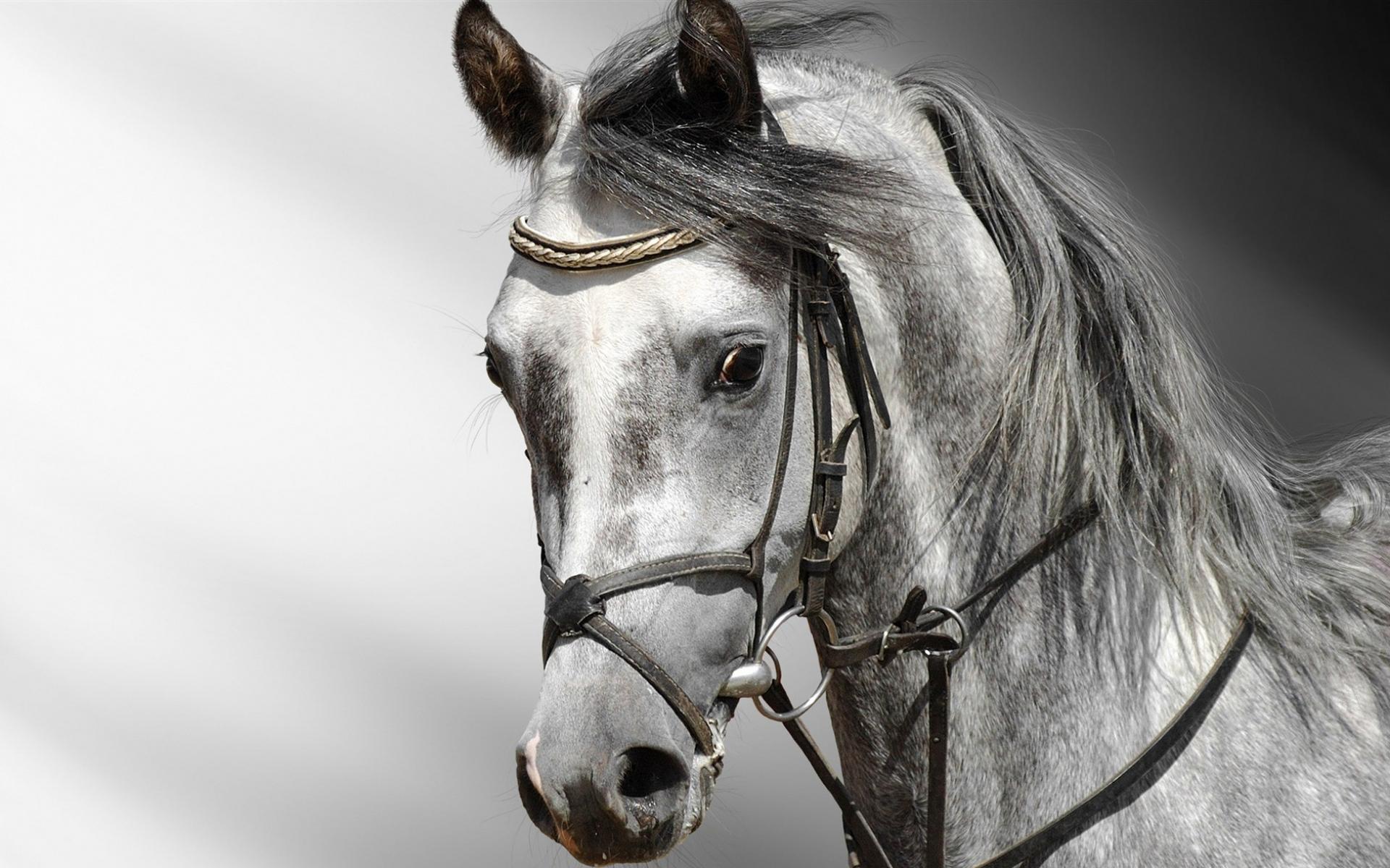 Красивая лошадь обои для рабочего стола, картинки, фото ...