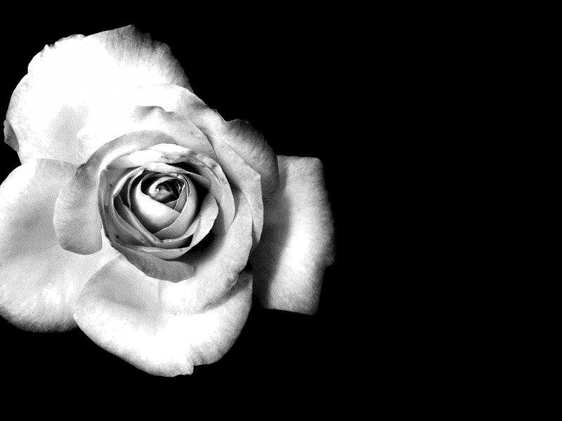 Красивый белый цветок картинки