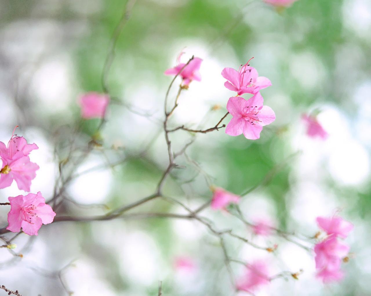 обои на рабочий стол лето природа цветы ромашки
