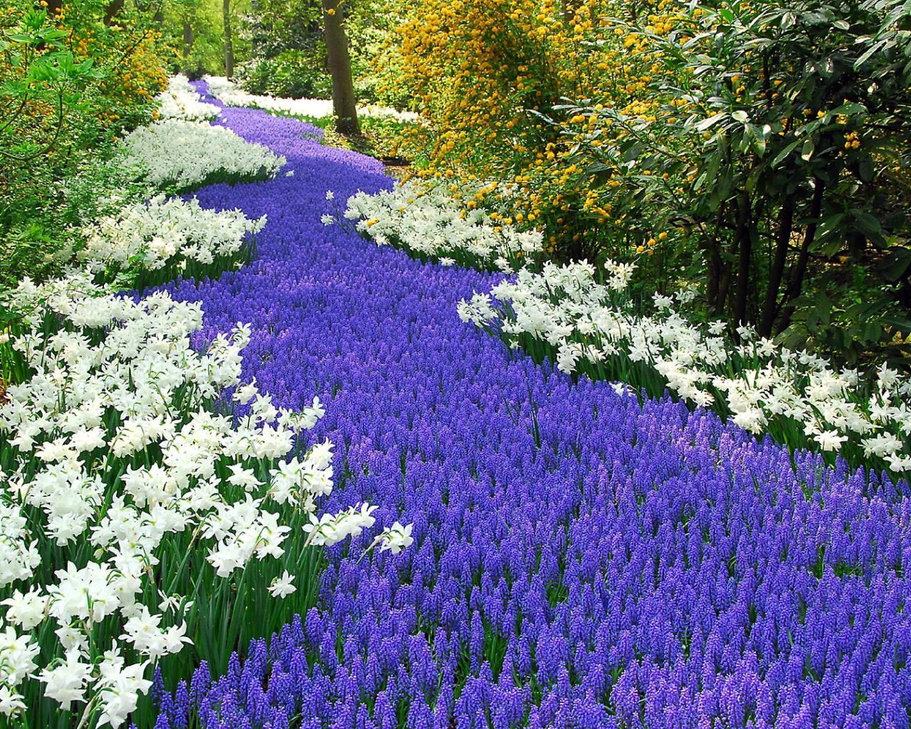 Фото дизайн цветов
