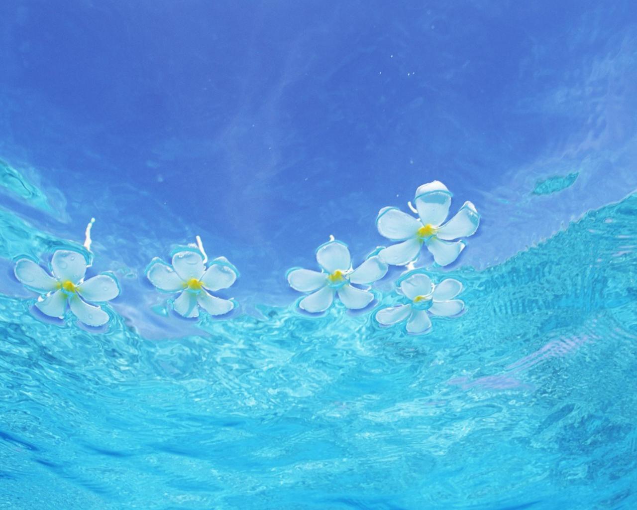 Цветы на воде обои для рабочего стола