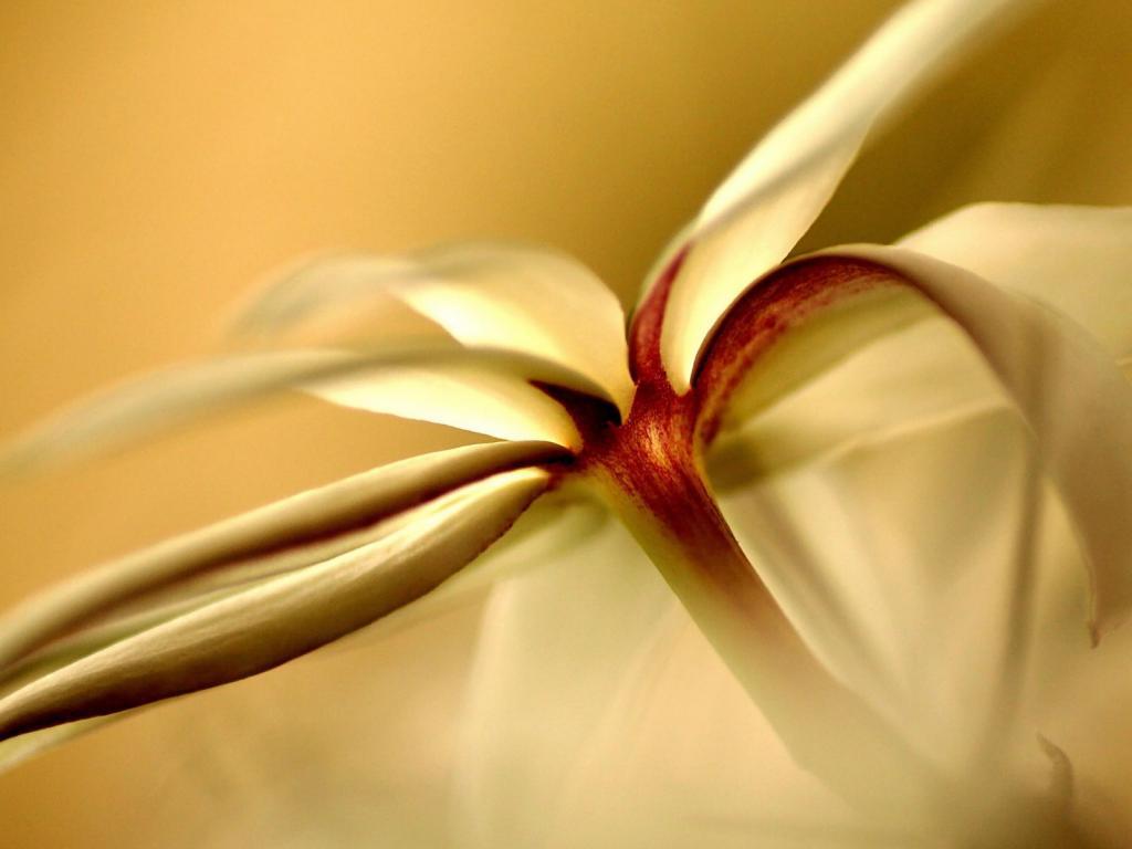 Цветы ванили картинки 6
