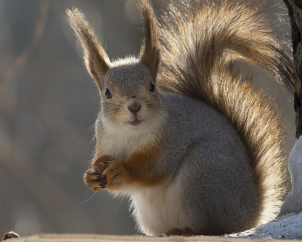 Животные животные белка зима 1280x1024