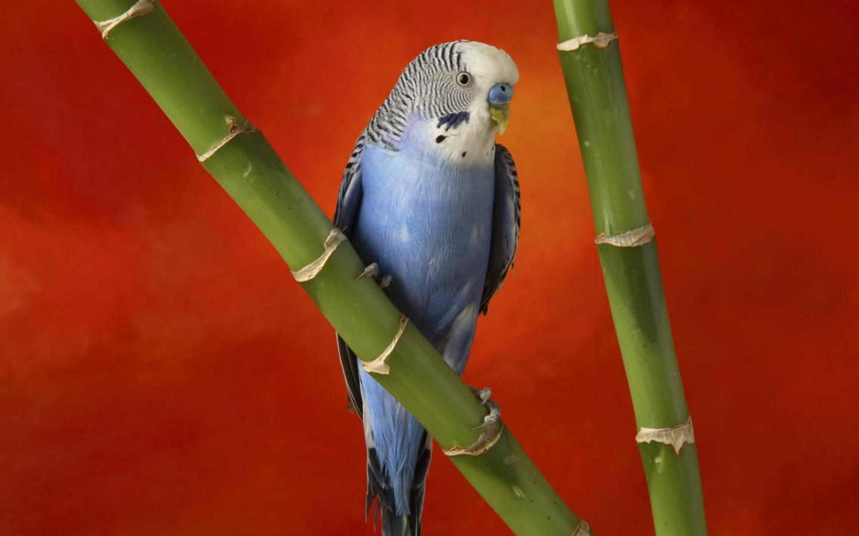 Смотри фото секс валнистава попугая 15 фотография