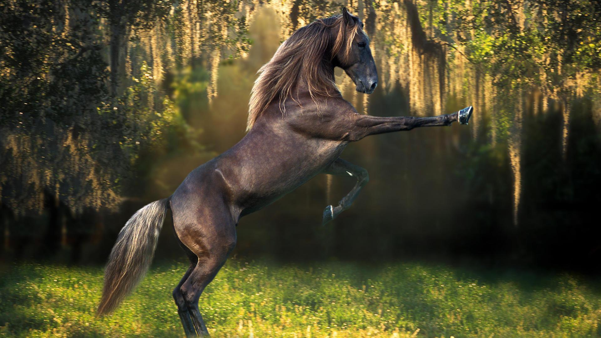 Лошади лошадки жеребец кобыла 1920x1080