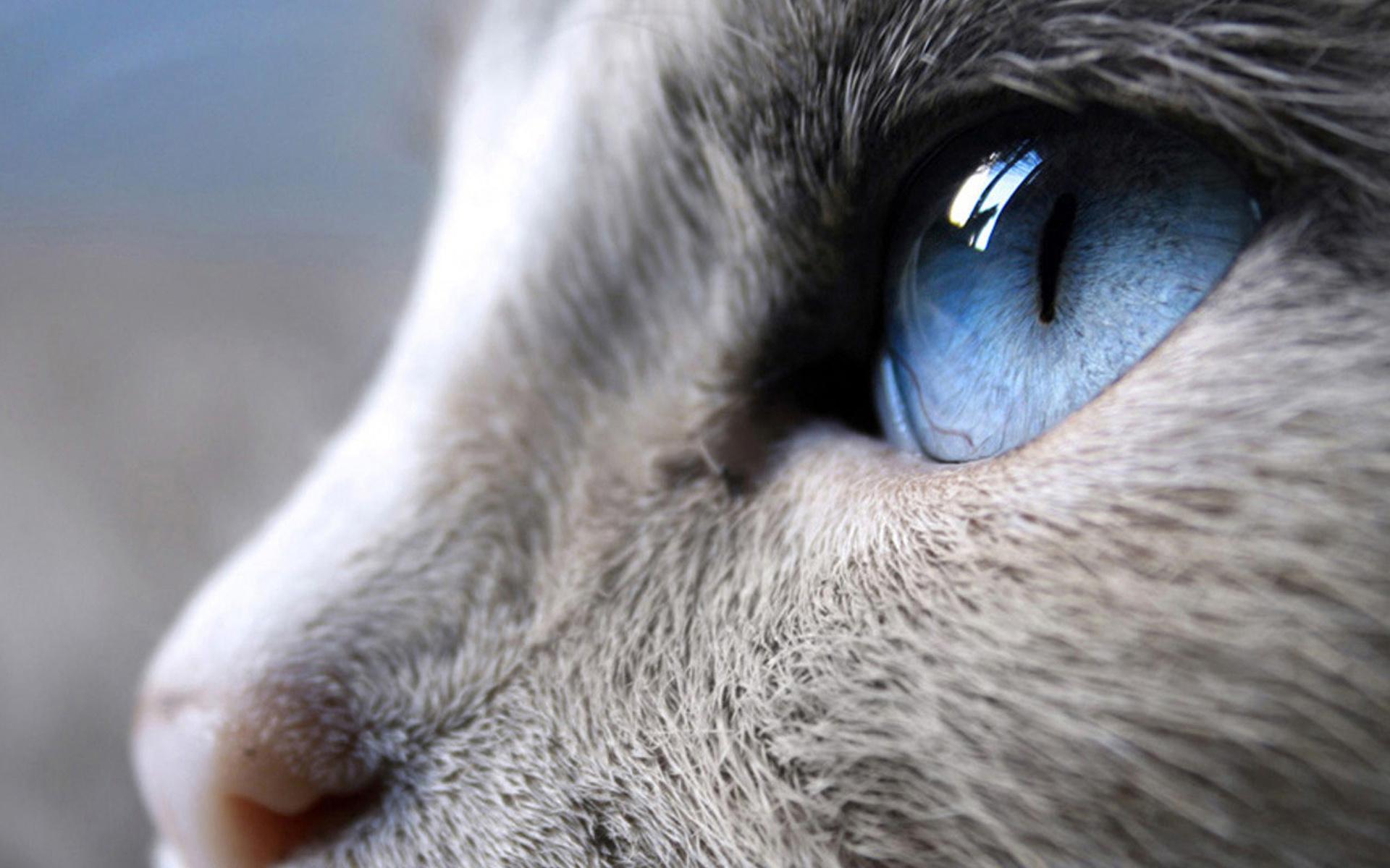 картинки на компьютер с животными: