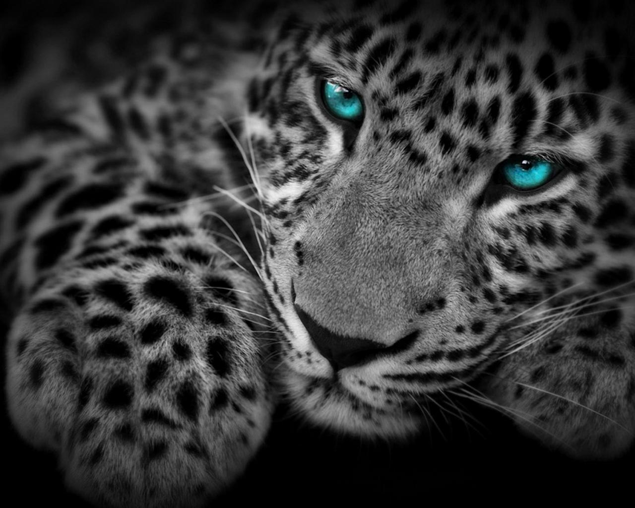 леопарда на рабочий стол