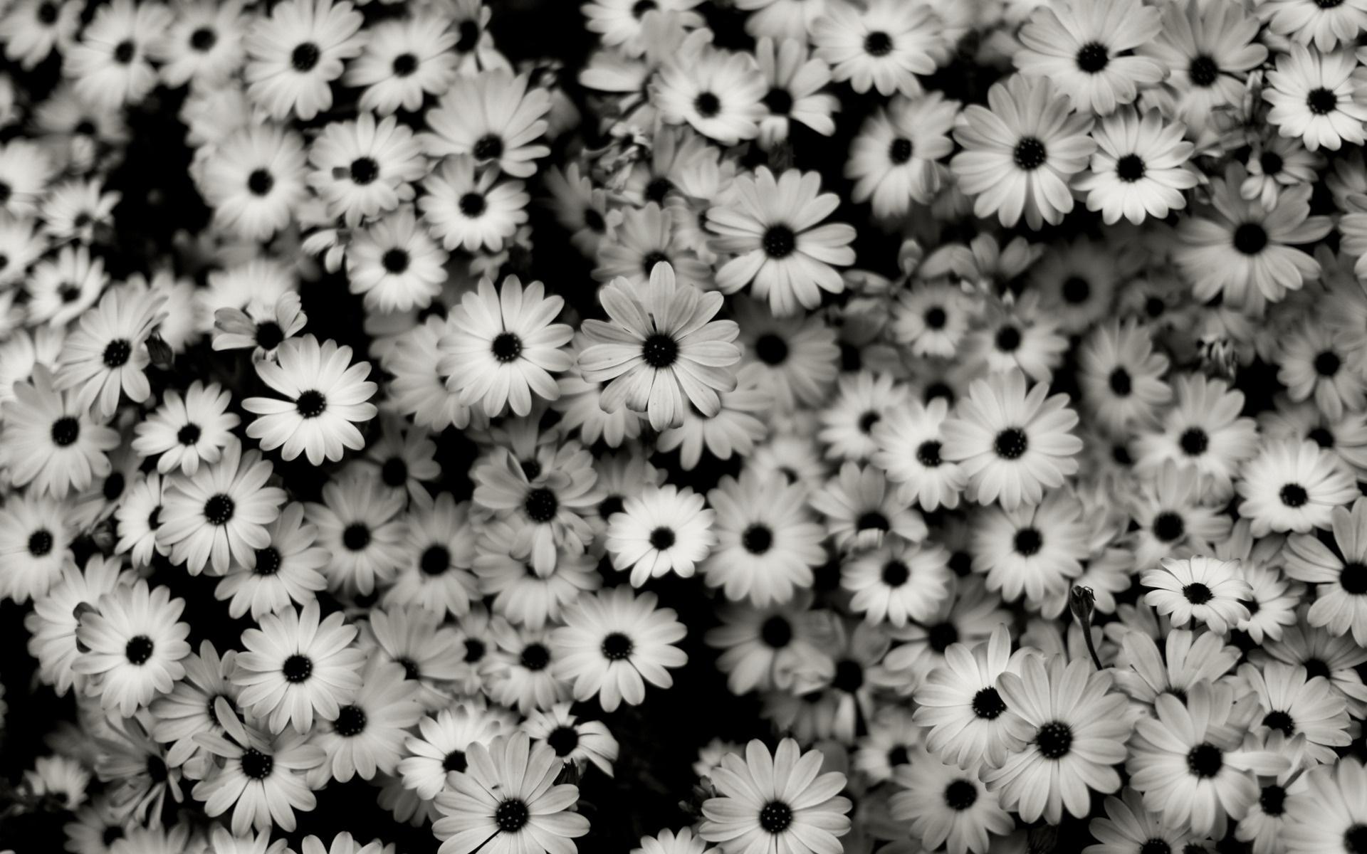 Цветы черно белые цветы природа 1920x1200