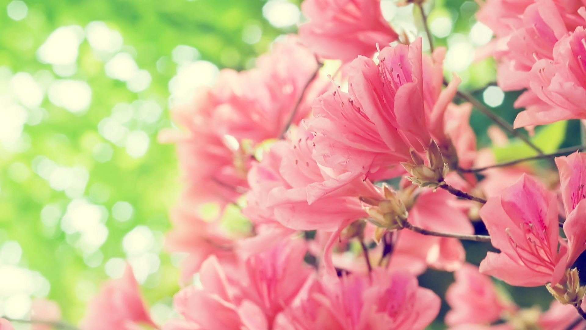 Картинки весны обои