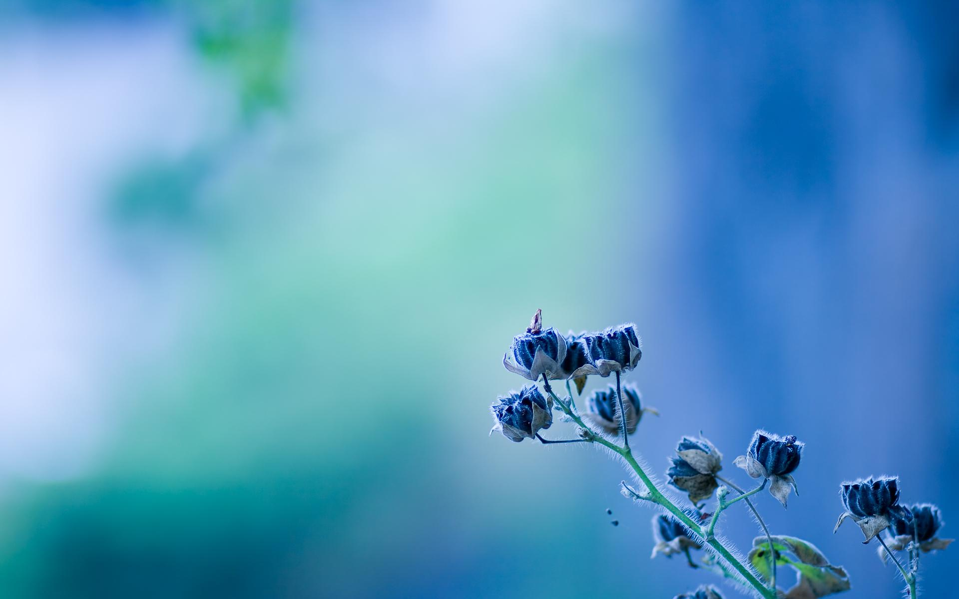 цветок колокольчик фото: