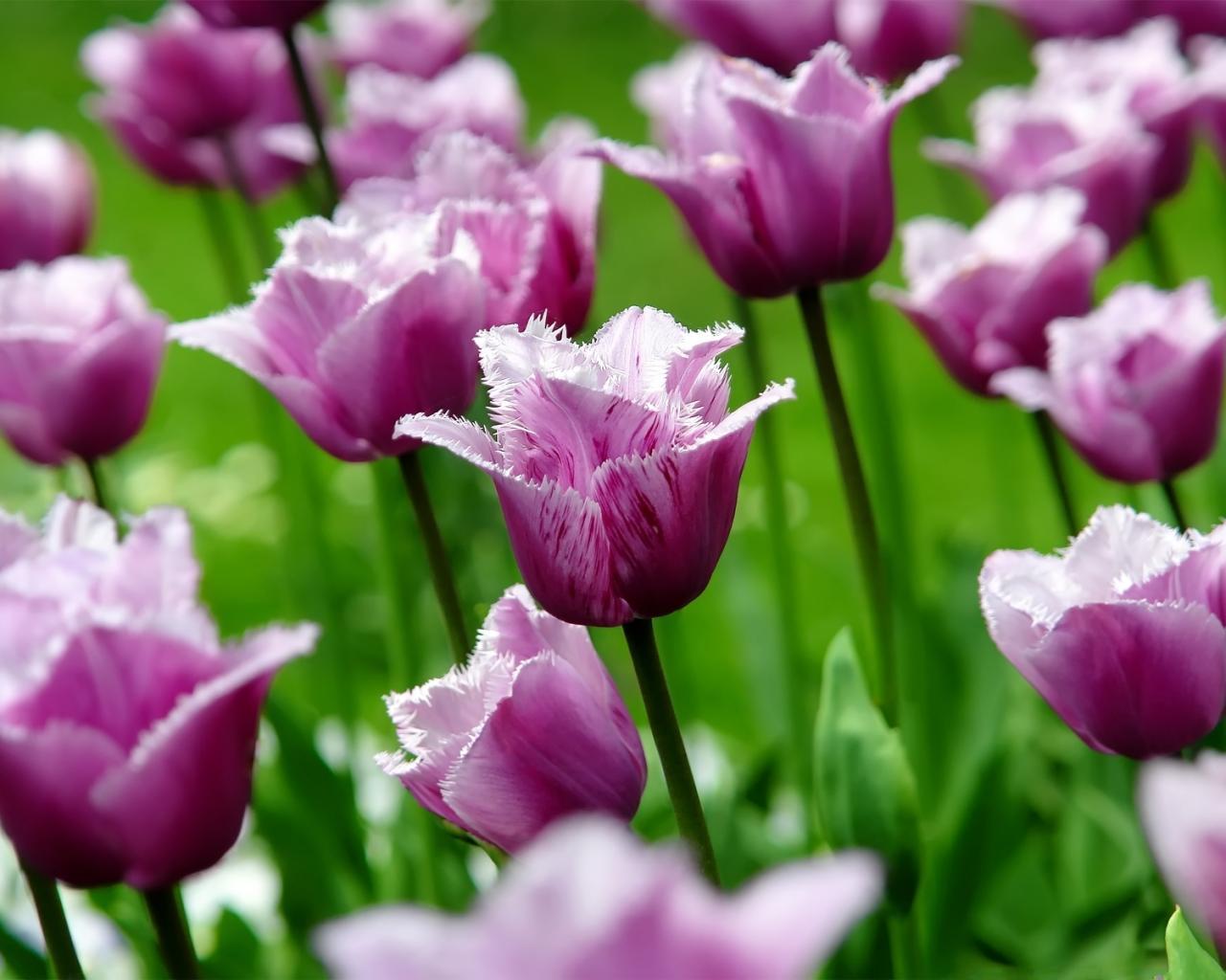 обои для рабочего стола природа цветы 1694