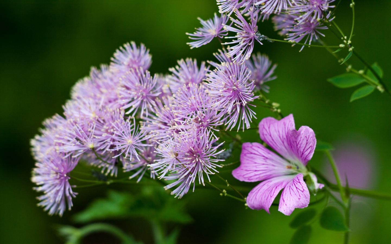 Бесплатные обои на рабочий стол скачать бесплатно полевые цветы 6