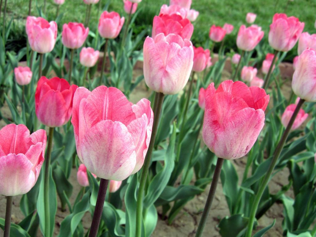 Скачать картинки цветы 8