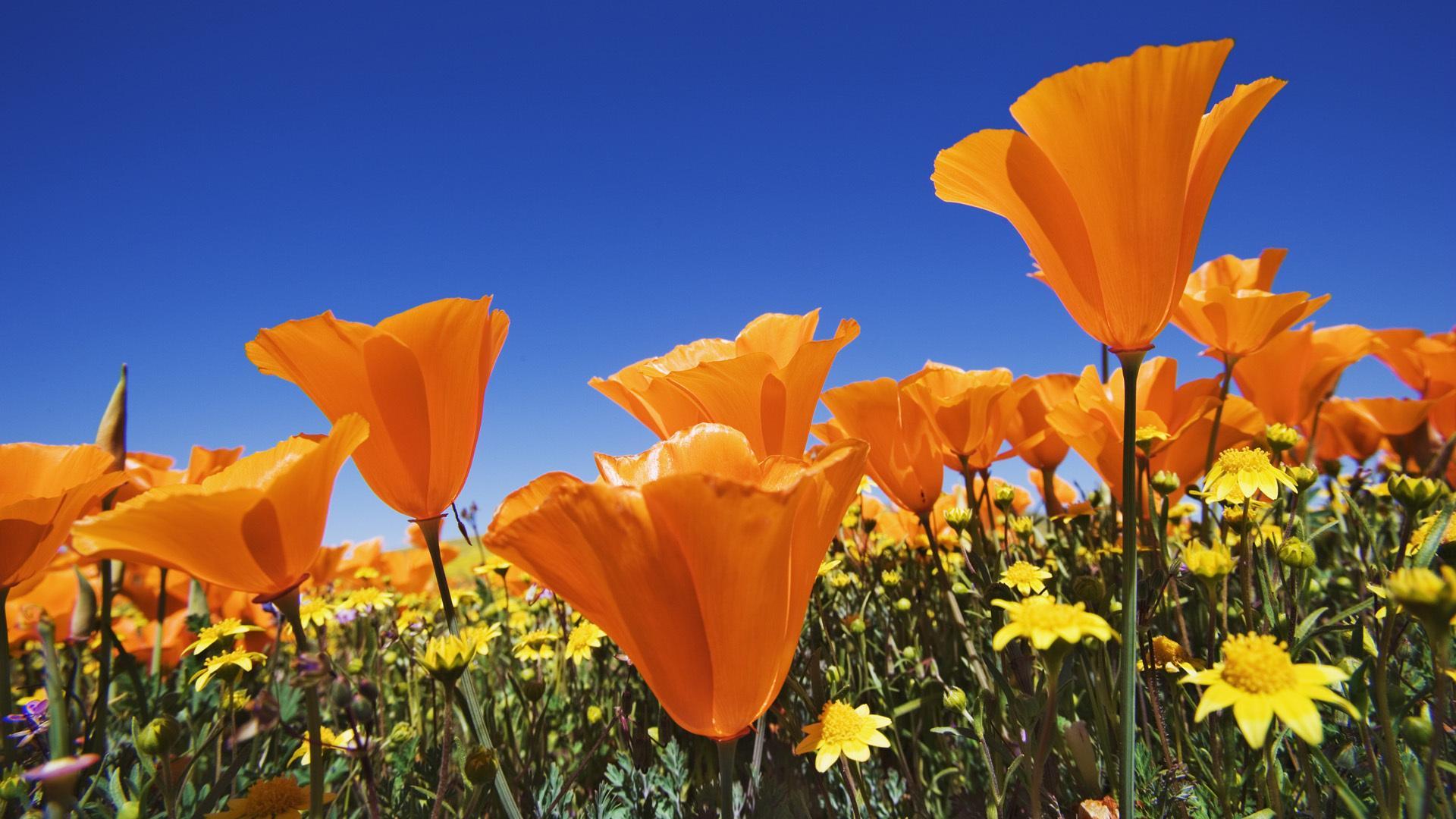 небо цветы фото:
