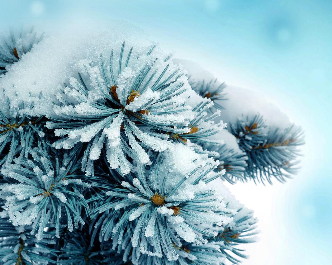 Картинки зимы на рабочий стол компьютера