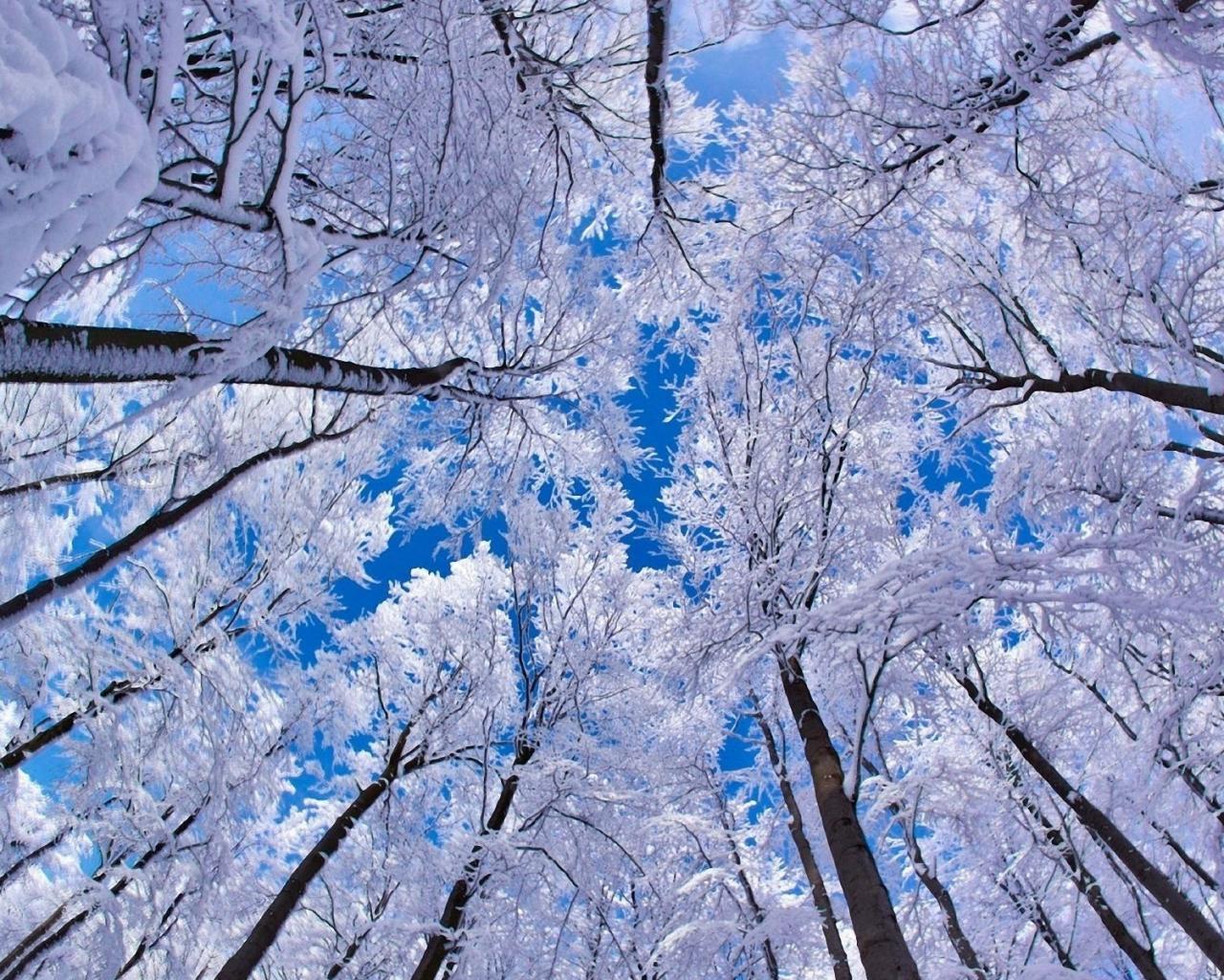 Красивое фото на аву зима