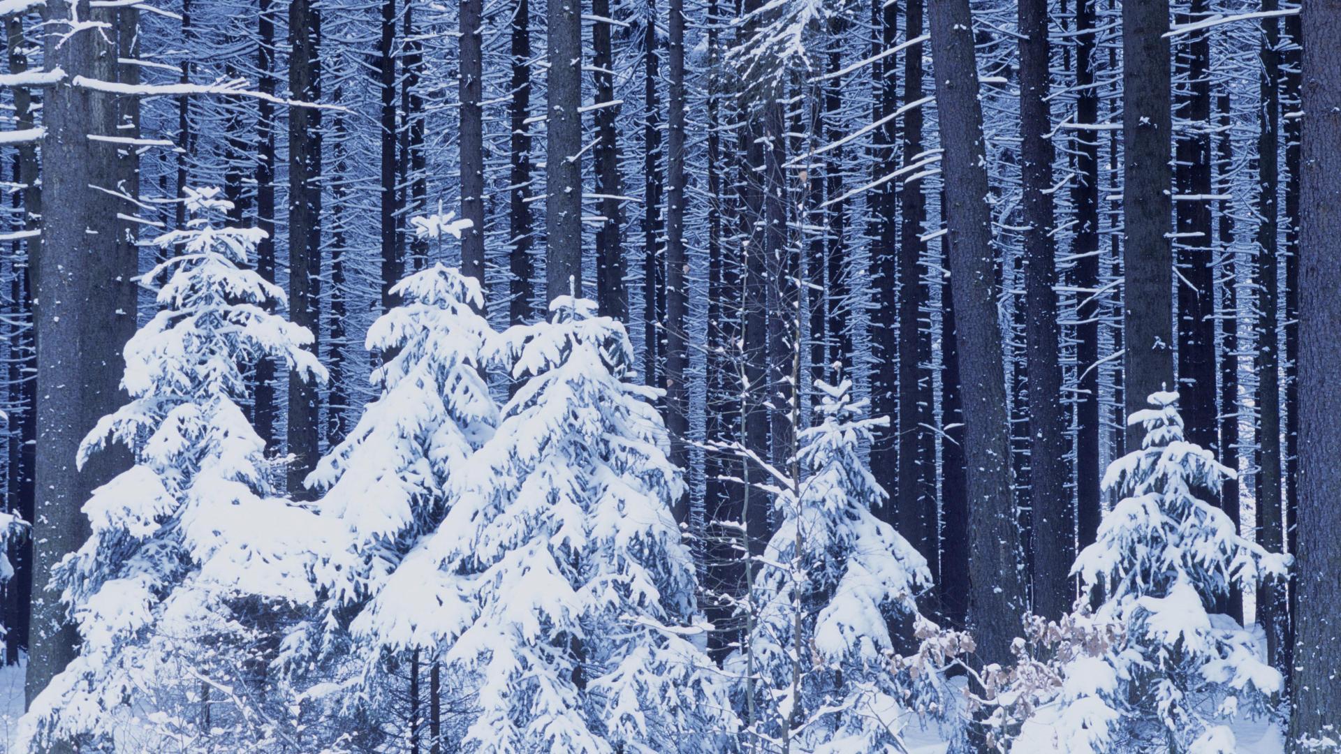 Новый год лес снег зима 1920x1080