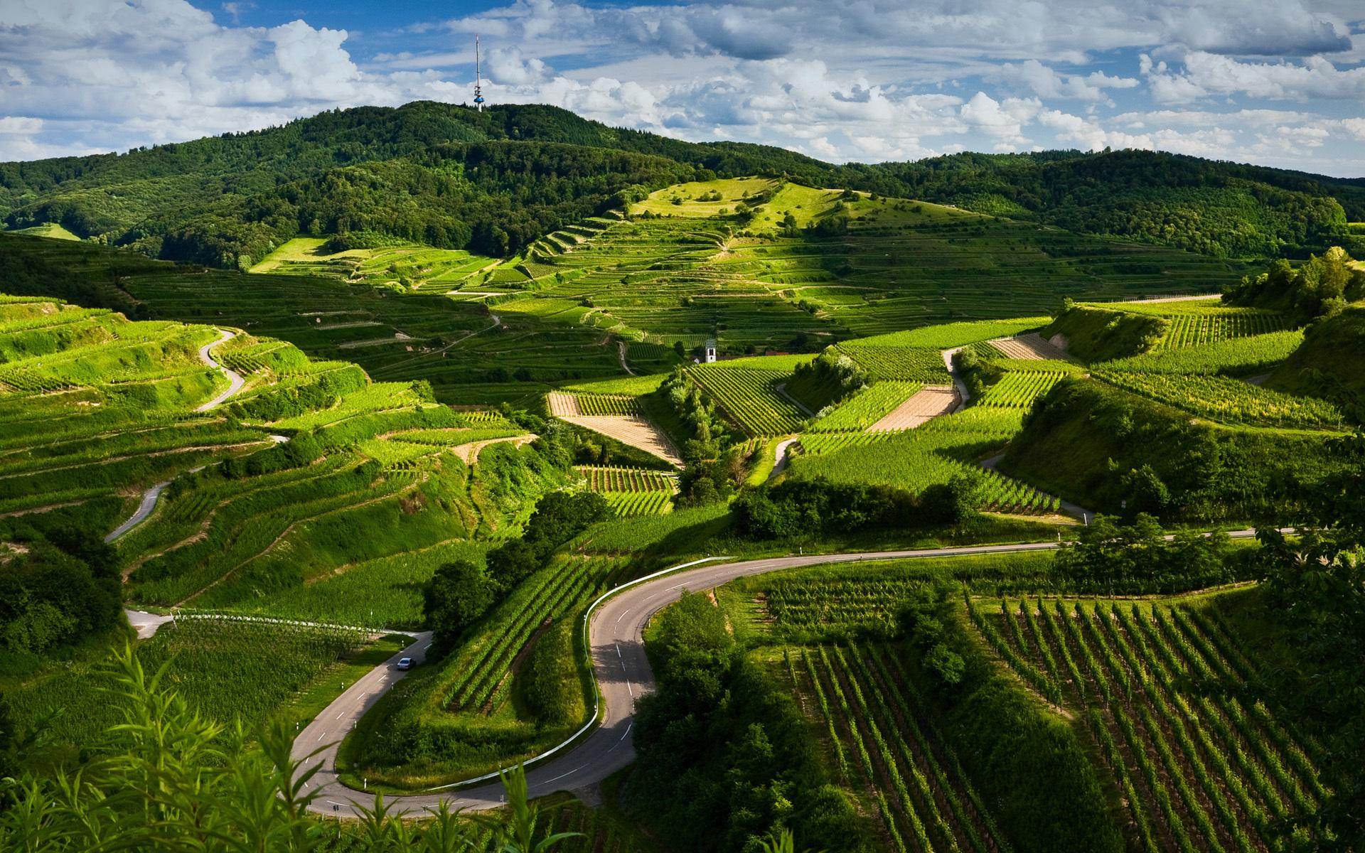 Природа пейзаж виноградники дорога