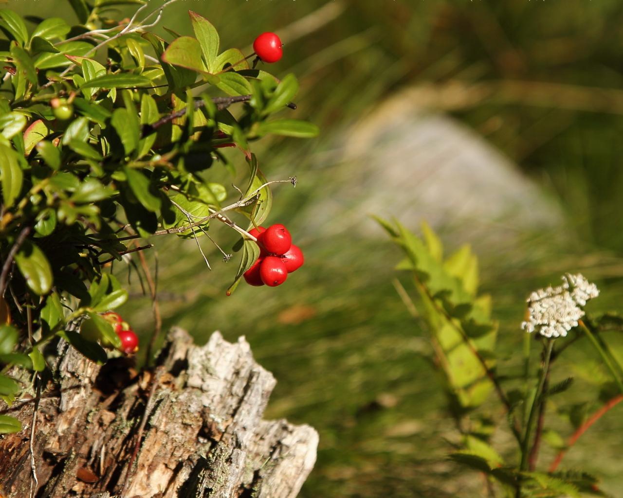 Картинки 1280x1024 лес лето природа