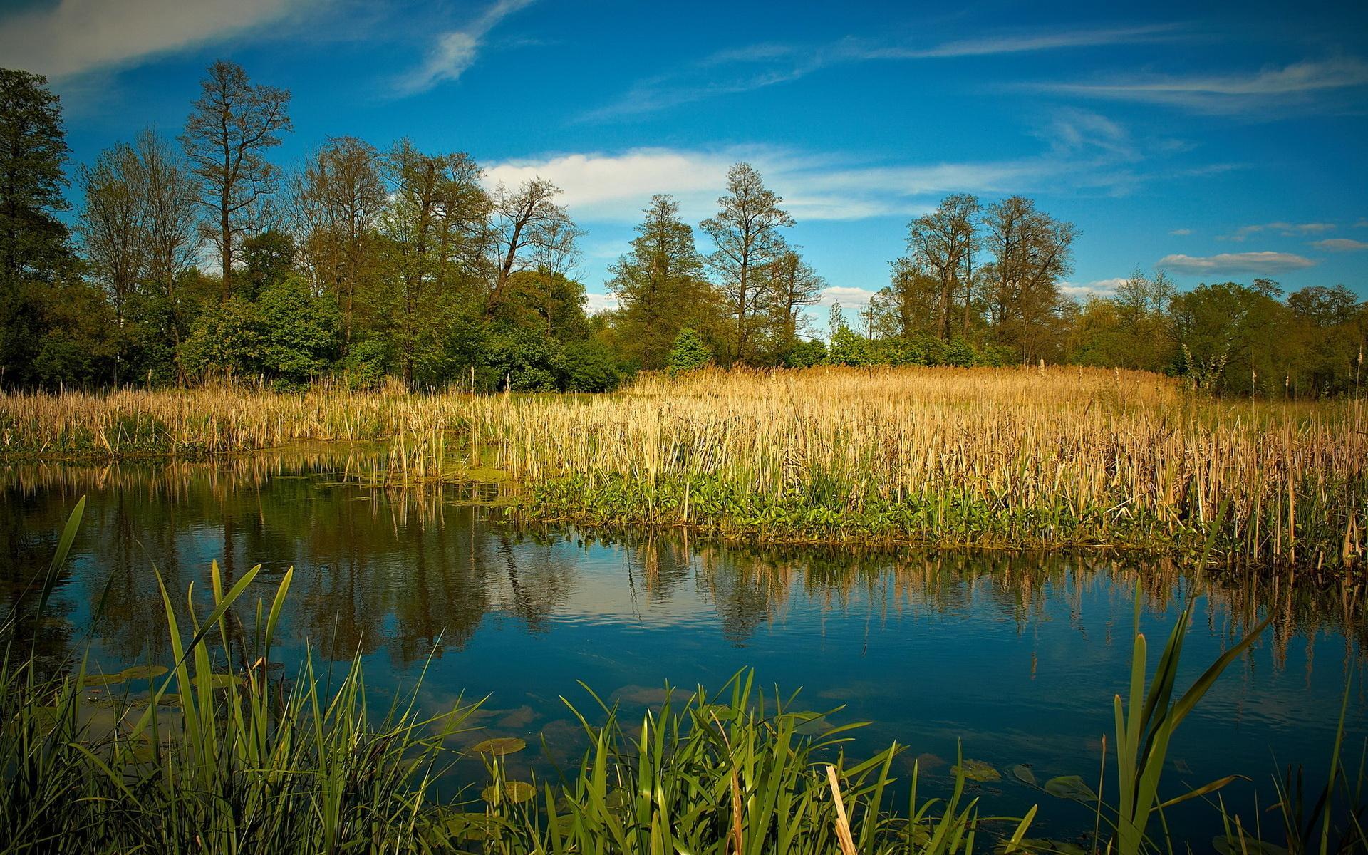Озеро небо лес природа камыш обои