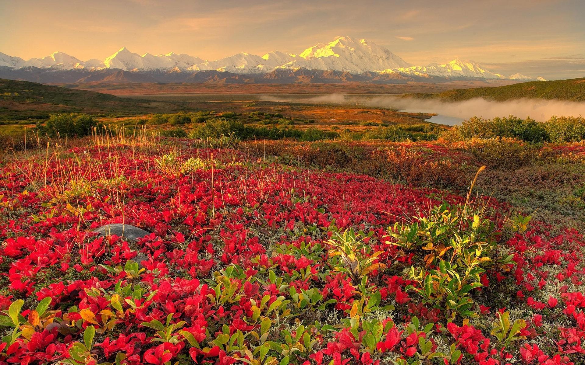 Природа цветы холмы и в дали горы обои