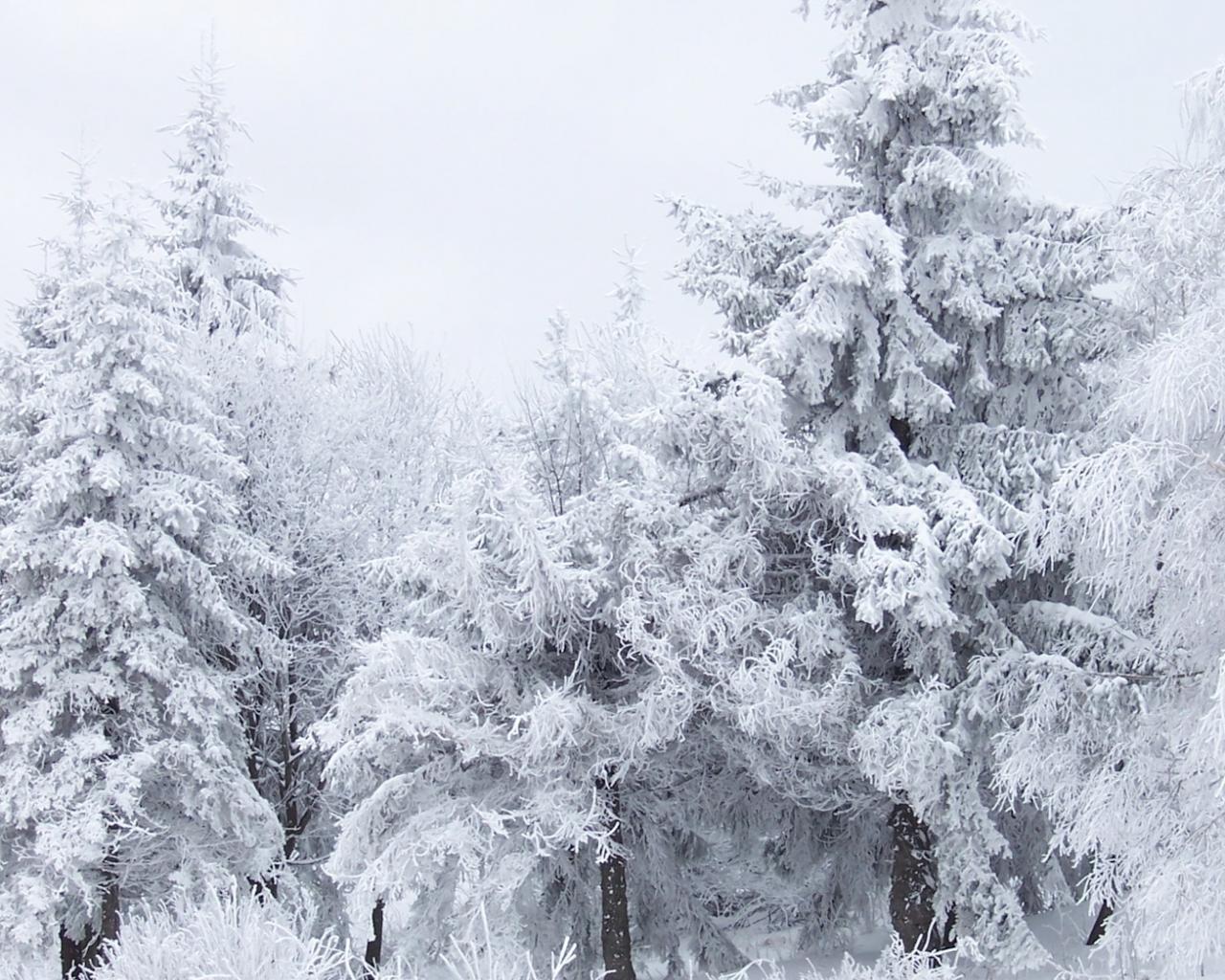 Скачать зимнего леса скачать 1920х1080