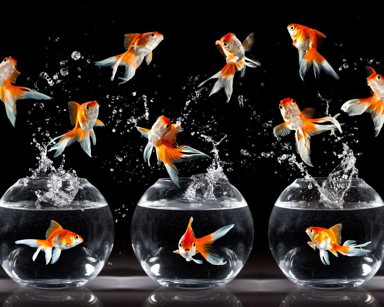 Картинки для рабочего стола аквариум с рыбками 7