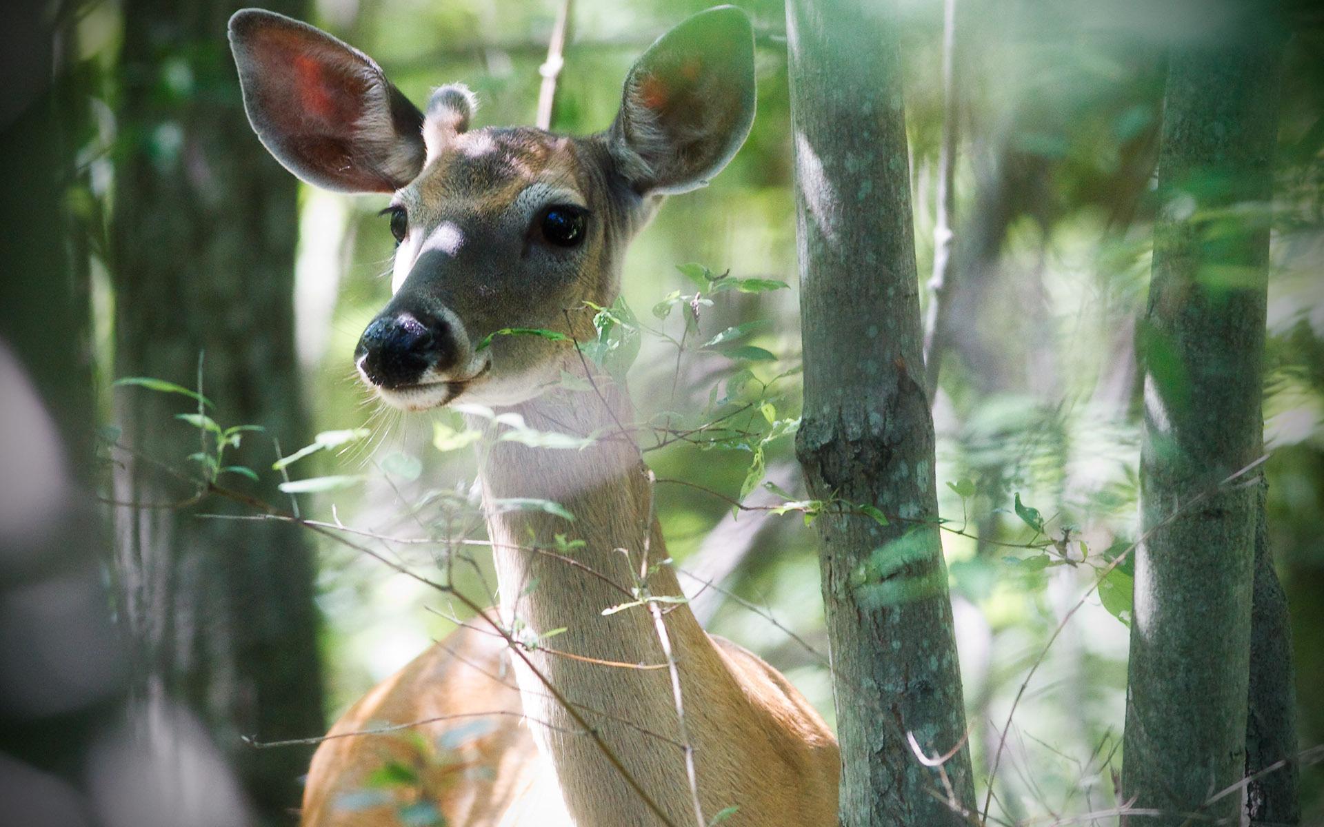 Картинки природа с животными в лесу