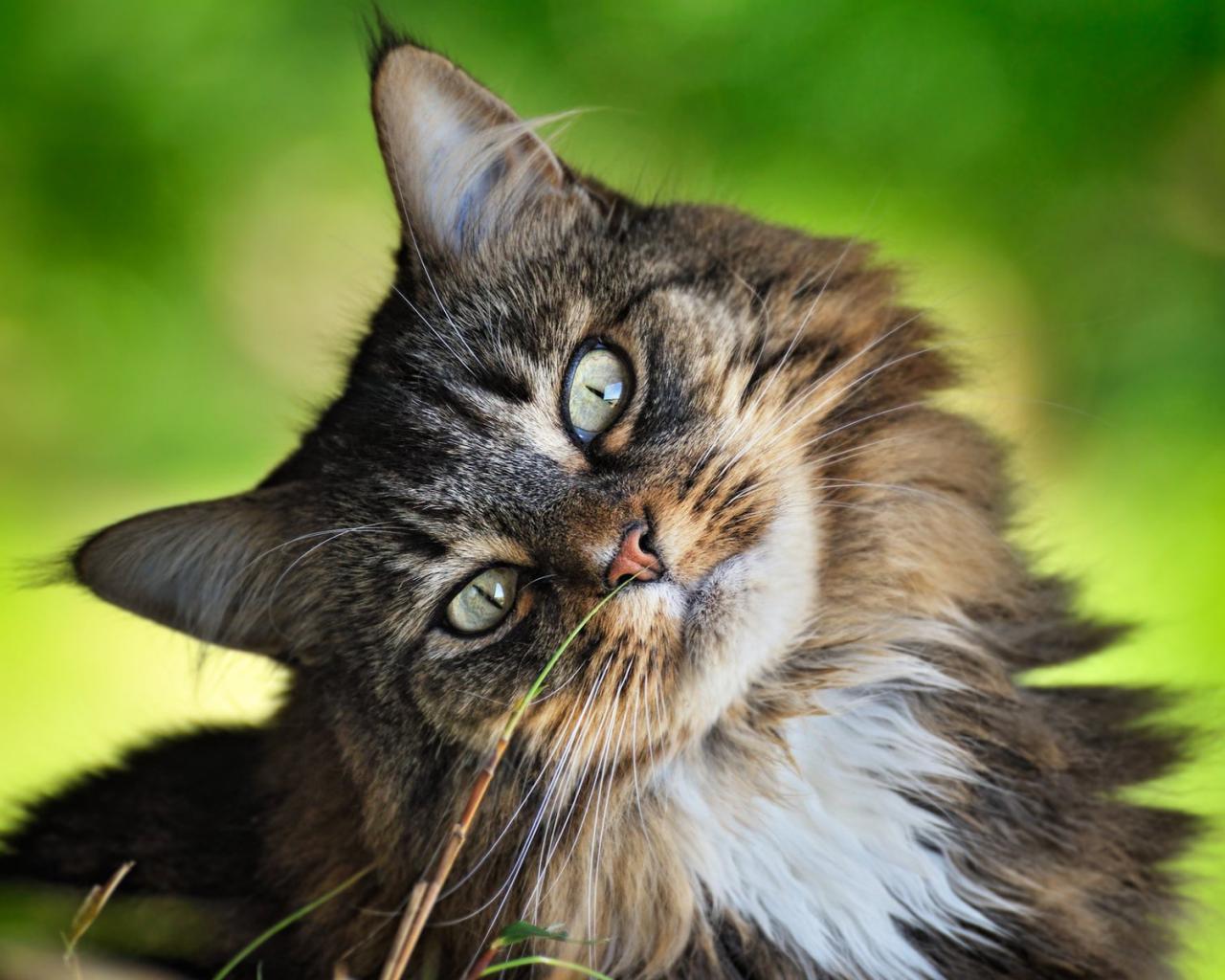 Животные коты