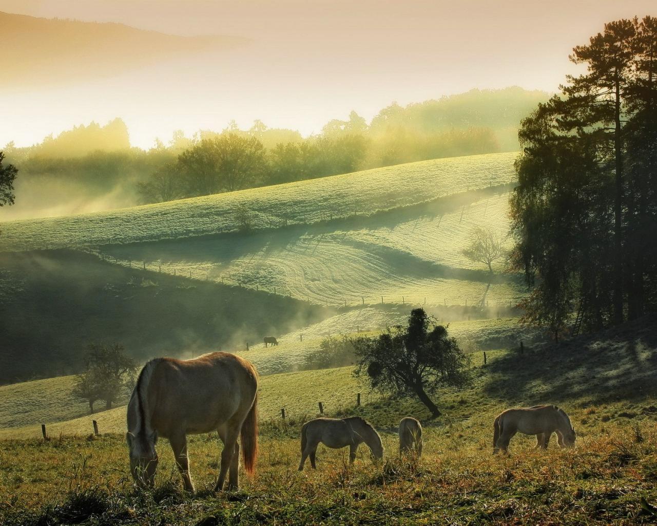 Картинки лошади для рабочего стола скачать бесплатно