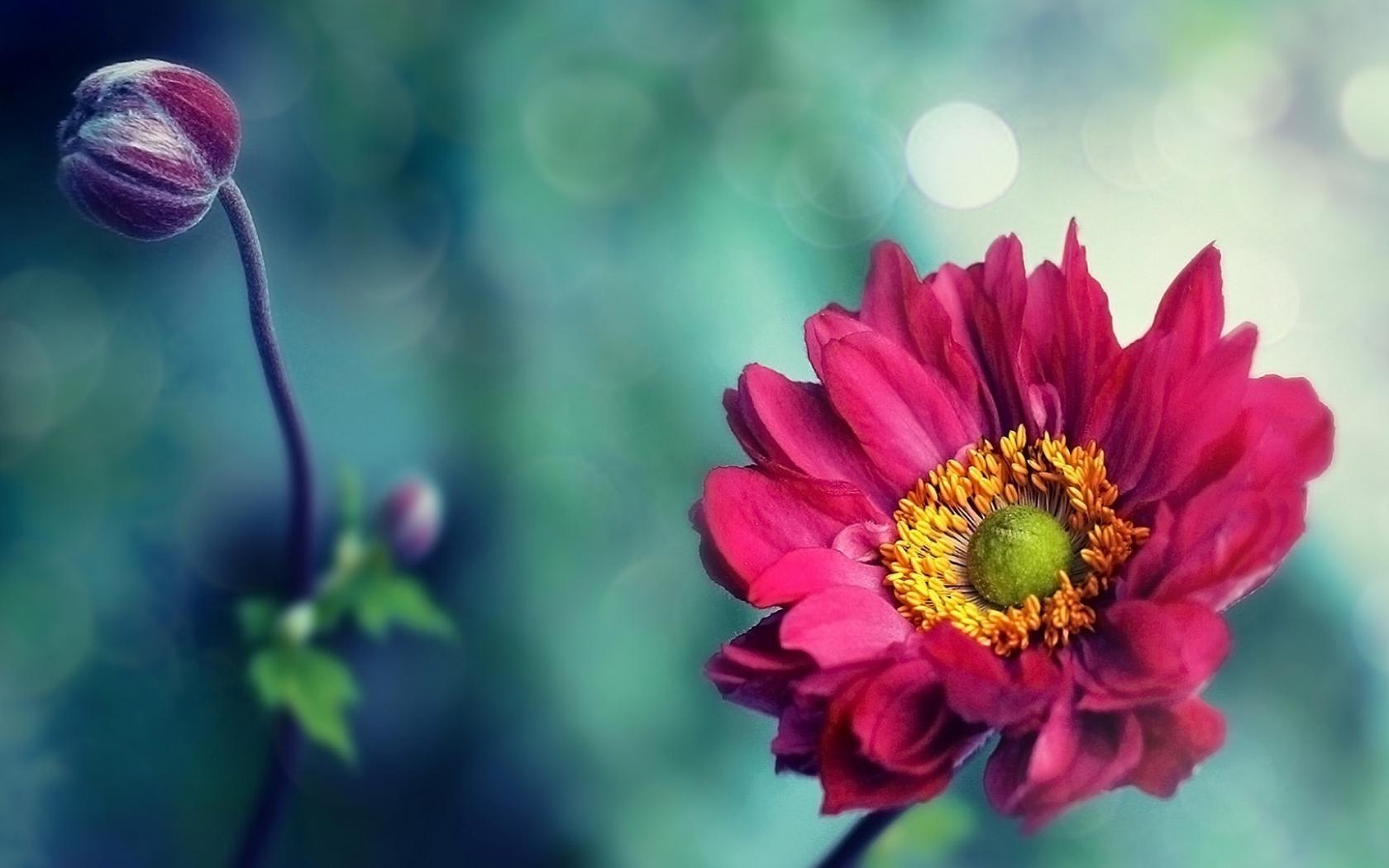 Обои цветок. Макро foto 16