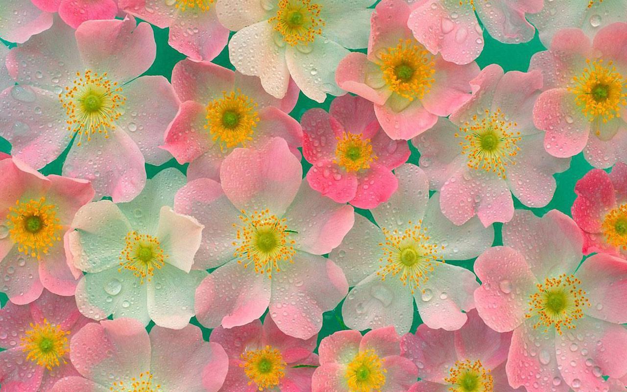Веселые цветы картинки 3