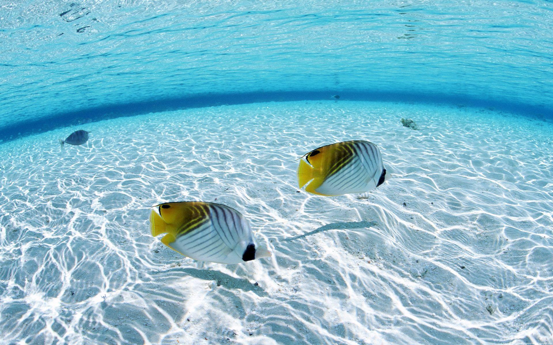 Вода рыбы обои для рабочего стола