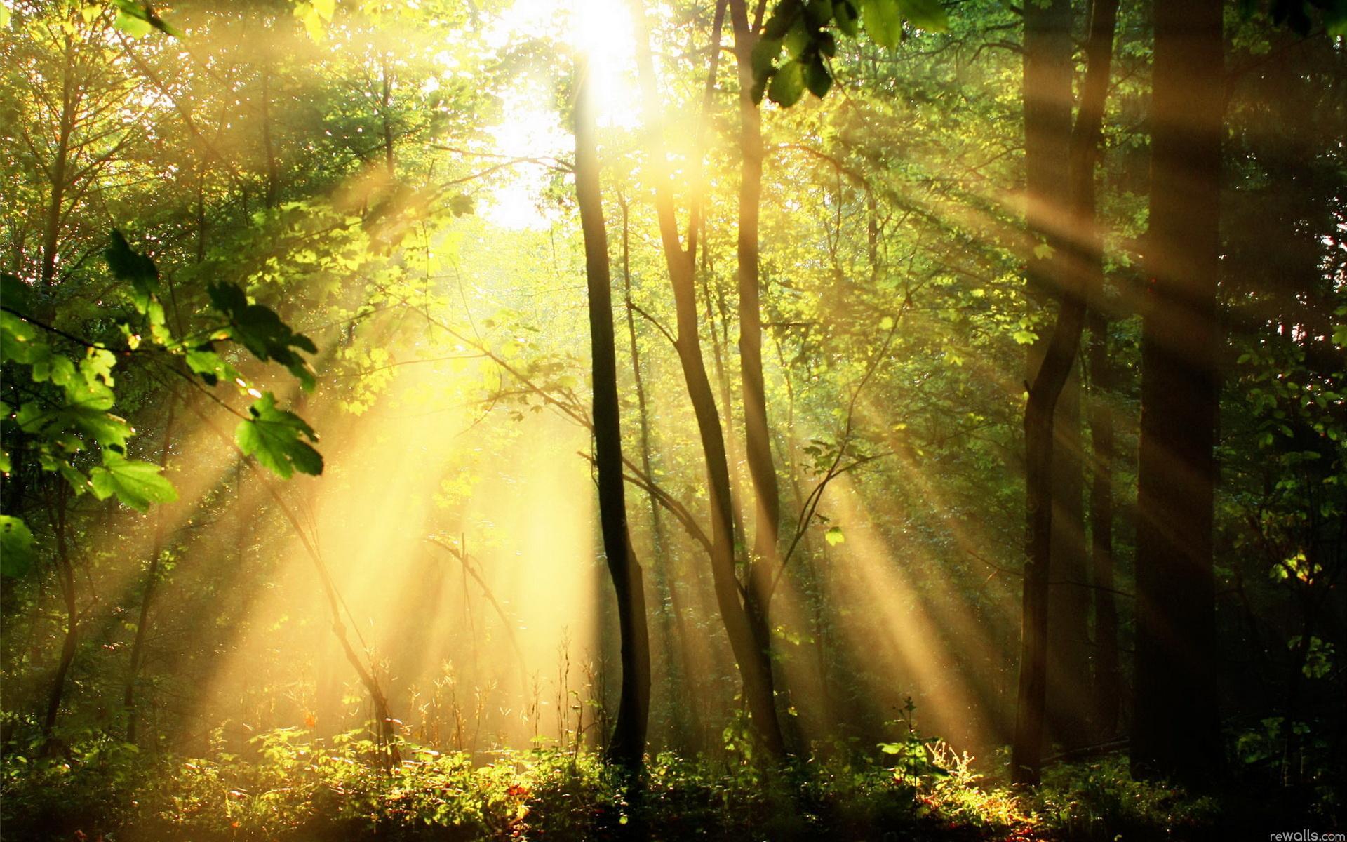 Обои природа утро свет лес природа