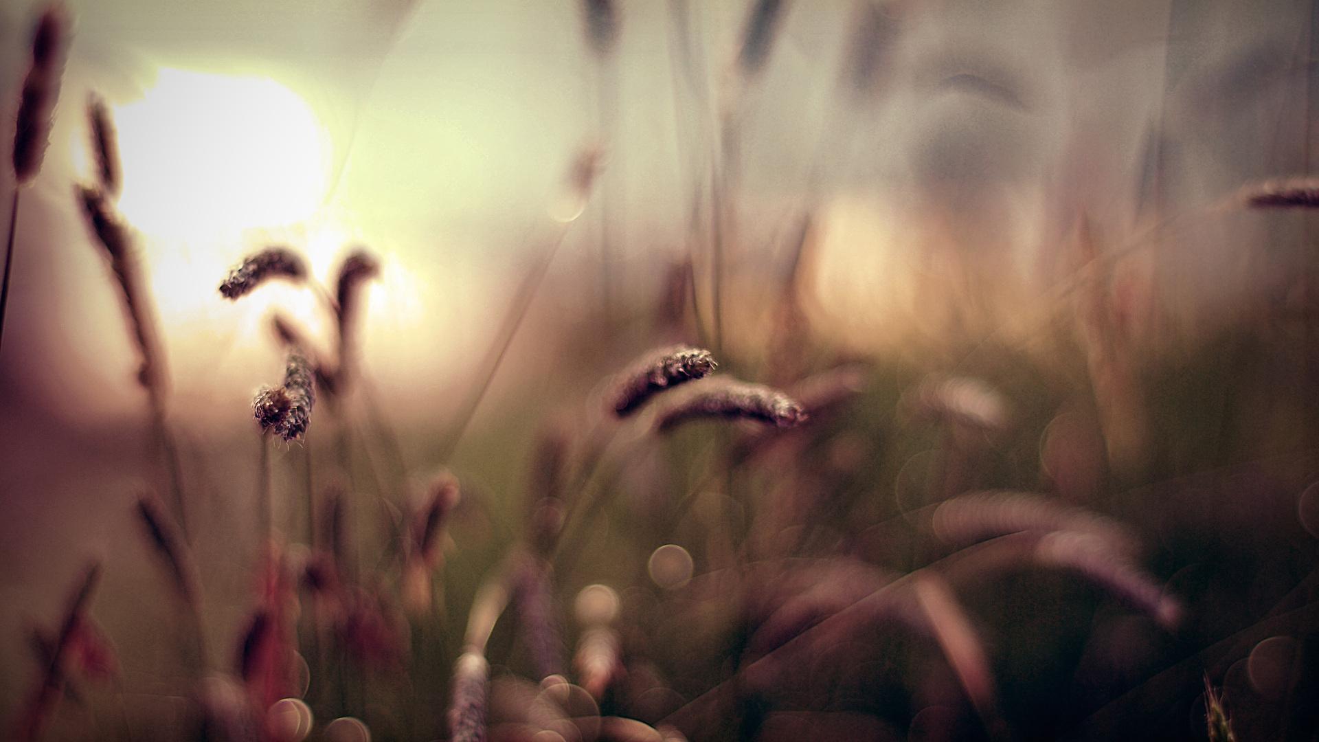 Обои колоски, Весна. Макро foto 11