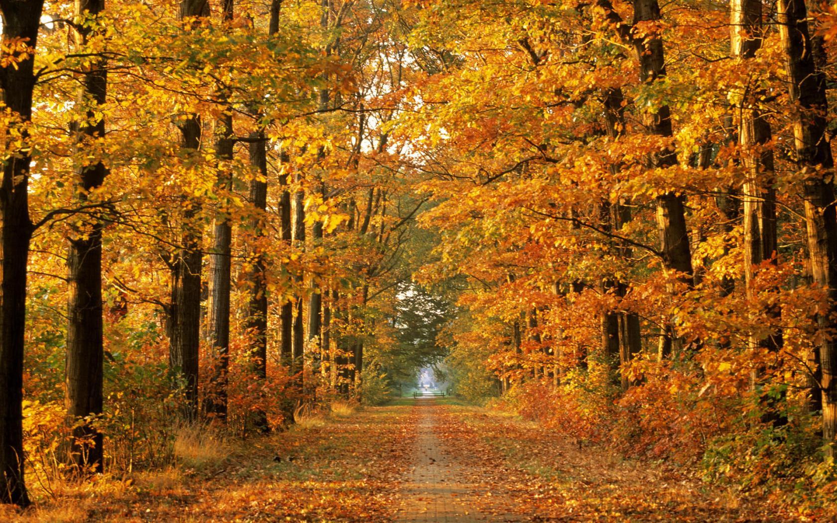 Деревья лес дорога красивые 1680x1050