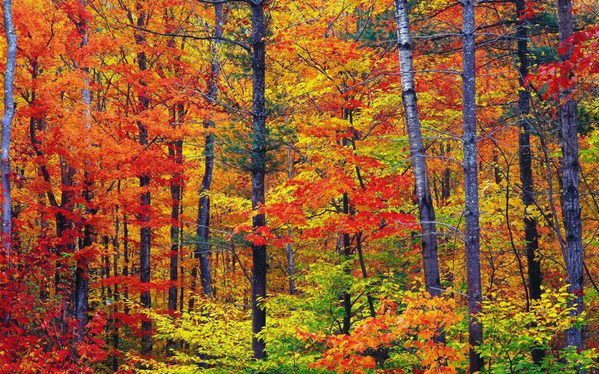 Осенние цвета обои для рабочего стола