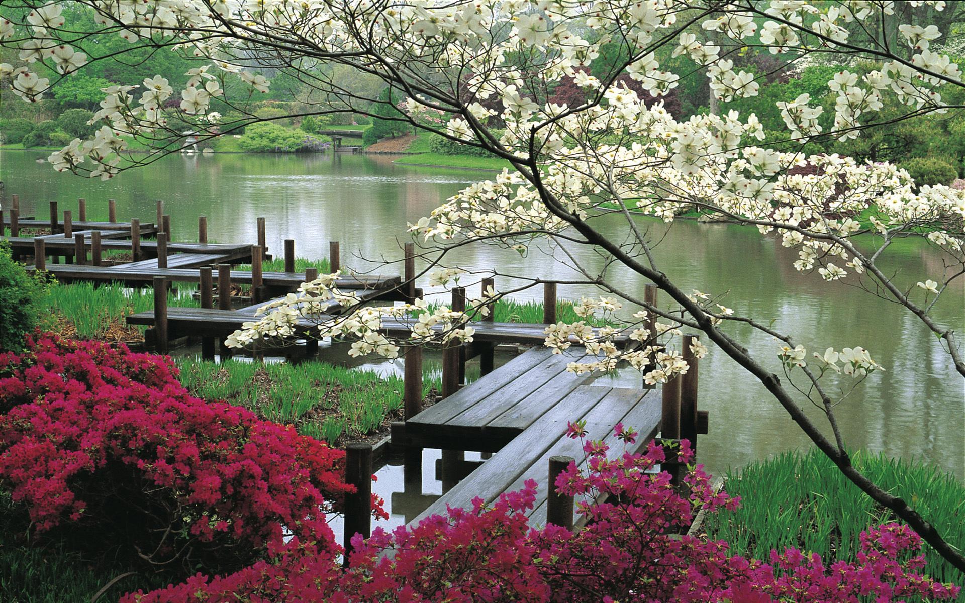 Сад обои для рабочего стола картинки