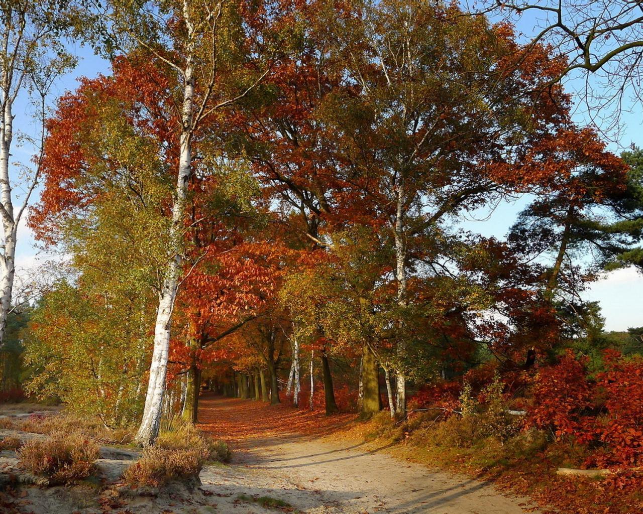 Осенний лес тропинка 1280x1024