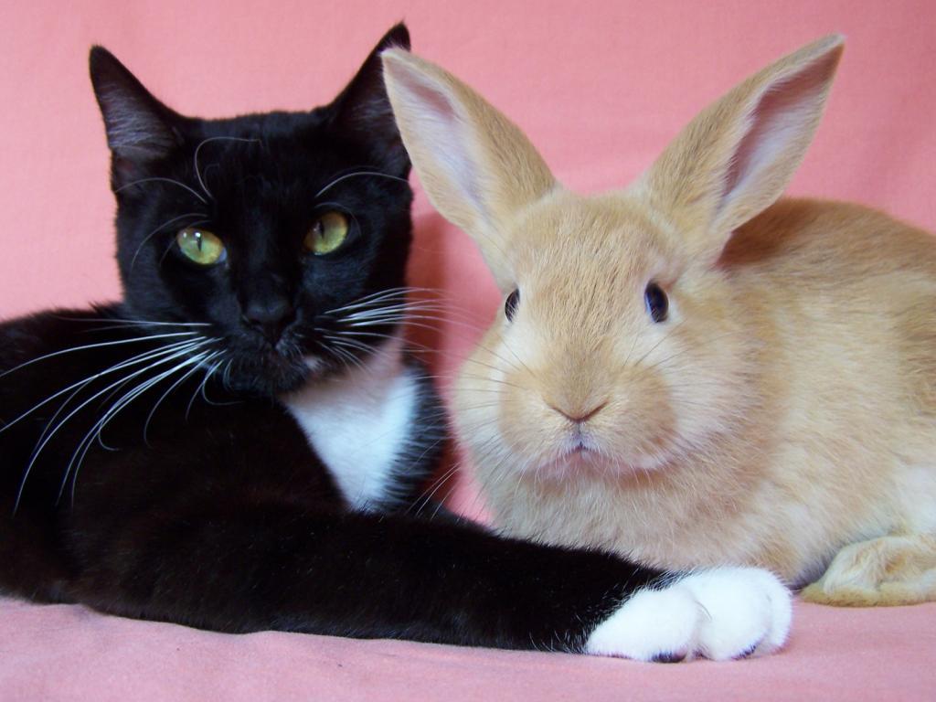 Кролики и кошки фото 2