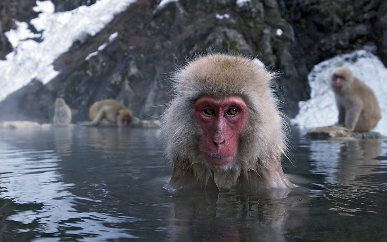Животные животные япония зима 1440x900